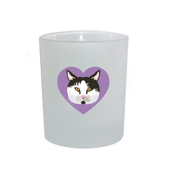 chat bicolore