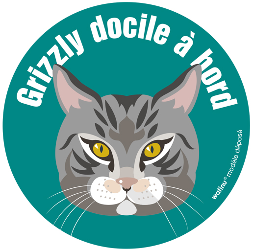 Chat gris Wafinu rond